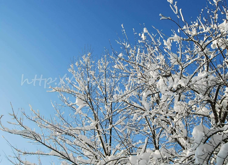 Copac nins